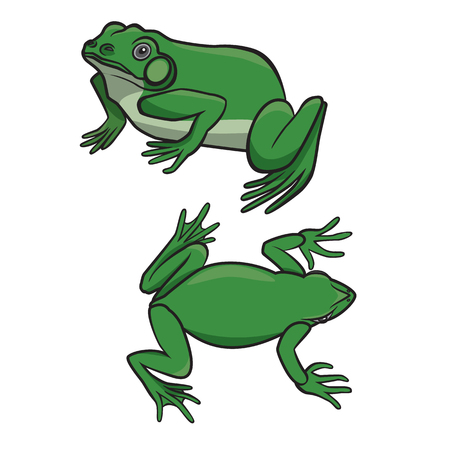 croaking: Two sitting green frogs isolated on white background