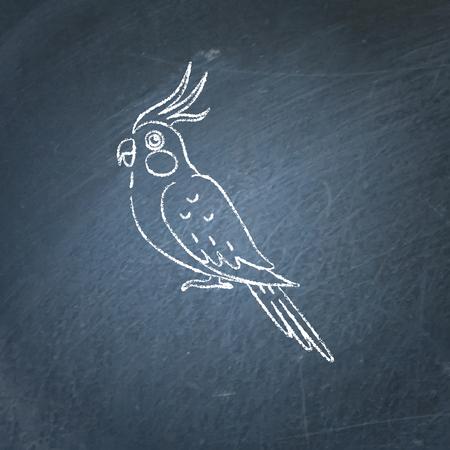 Corella parrot icon sketch on chalkboard