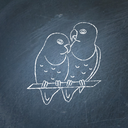 Lovebird parrots couple icon sketch on chalkboard. African tropical bird symbol drawing on chalkboard.