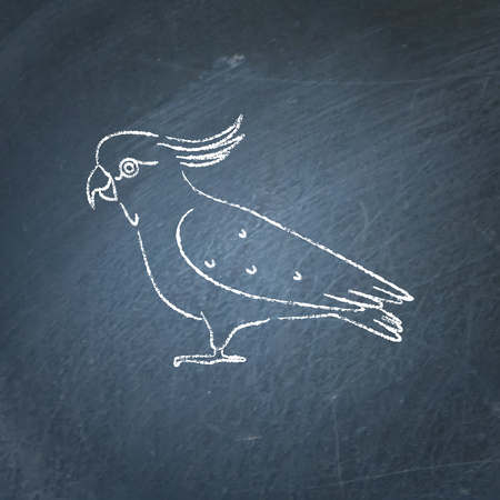 Cockatoo parrot icon sketch on chalkboard