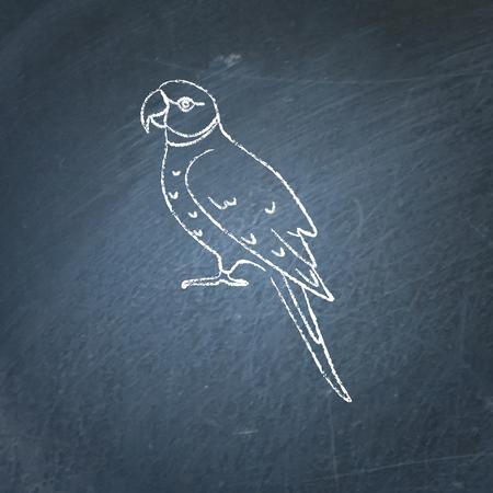Alexandrine ringneck parrot icon sketch on chalkboard. Exotic tropical bird symbol drawing on blackboard. Illustration