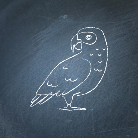 African grey parrot icon sketch on chalkboard. Exotic tropical bird symbol drawing on blackboard.