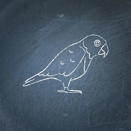Senegal parrot icon sketch on chalkboard. Exotic tropical bird symbol drawing on blackboard.