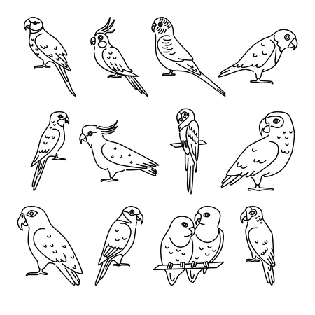 Set of parrot icons in thin line style Illustration