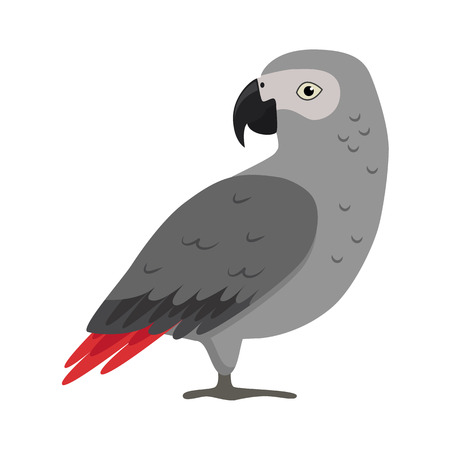 African grey parrot icon in flat style. Exotic tropical bird symbol on white background Vettoriali