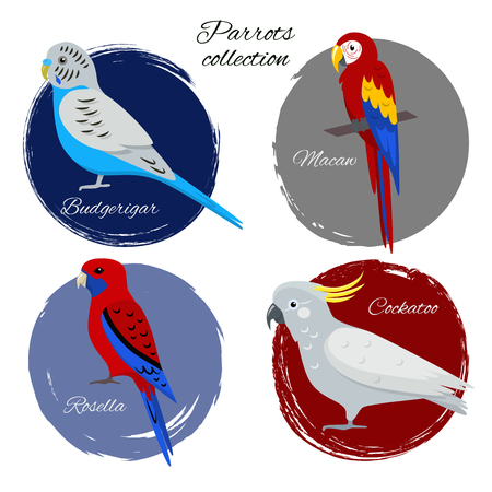 Colorful parrot icon set