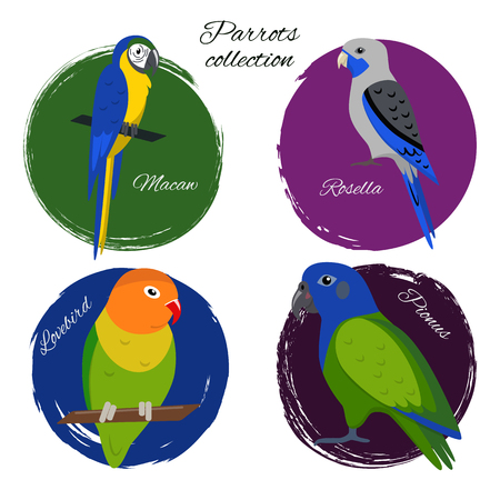 Colorful parrot icon set in flat style. Blue-and-yellow macaw, blue rosella, lovebird and pionus parrots.