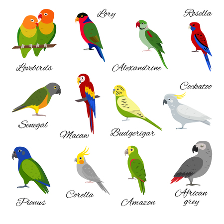 Colorful set of parrot icons