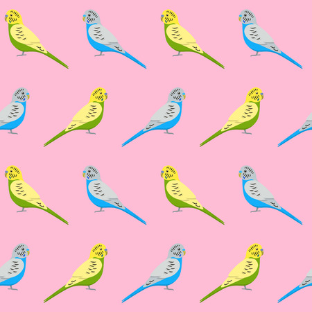 Seamless pattern with budgie parrots