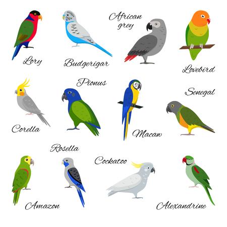 Reeks kleurrijke papegaaipictogrammen op witte achtergrond.