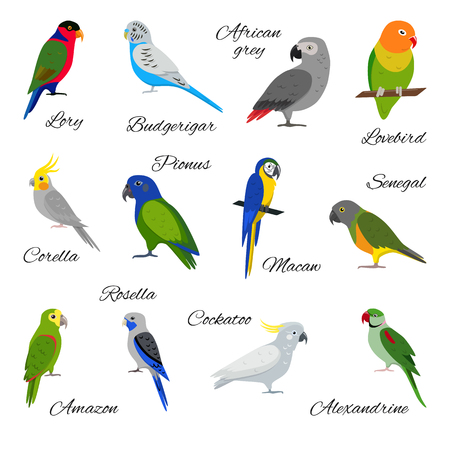 Set of colorful parrot icons on white background.