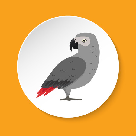 African grey parrot icon in flat style