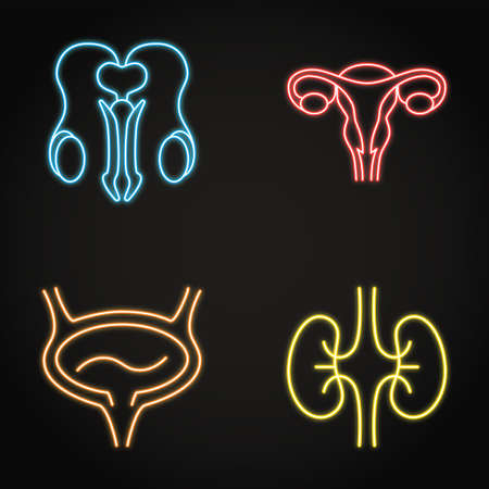 Urogenital system neon icon set in line style