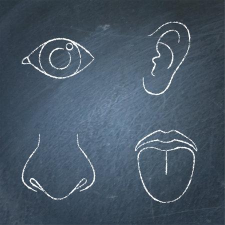 Human sense organ icon sketch set on chalkboard
