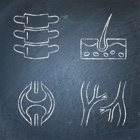 Human organs icon sketch set on chalkboard