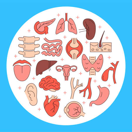 Human internal organs round concept banner in colored line style