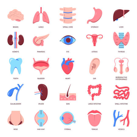 Human organs icon set in flat style