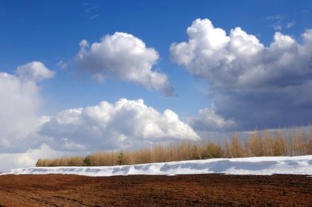 Spring last snow Stock Photo - 14045604