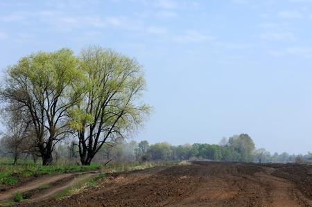 arable land: Wood, arable land Stock Photo