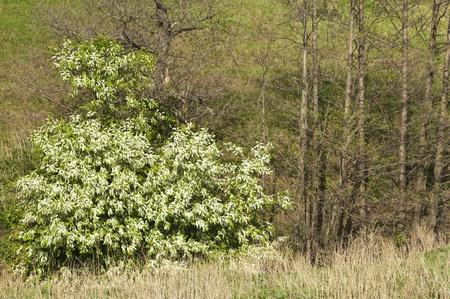 spring Stock Photo - 14047525