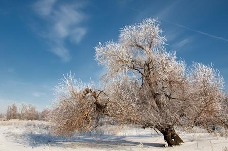 winter photo