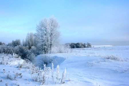 goodliness: winter