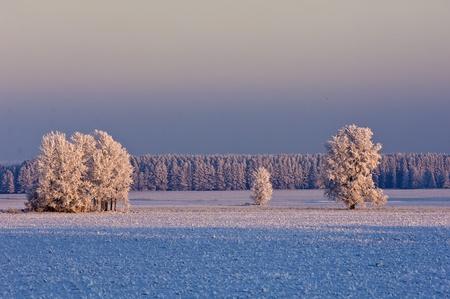 paysage: winter