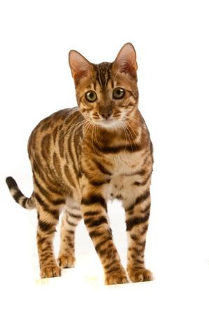 ludicrous: cat