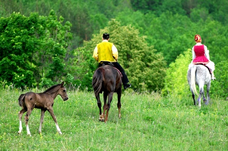 vomeronasal: horse