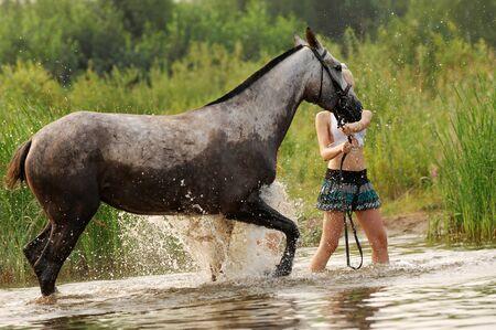 horse Stock Photo - 14073193
