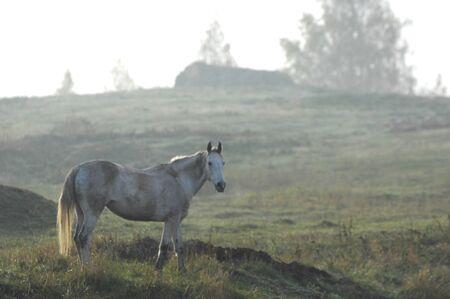 dichromatic: horse