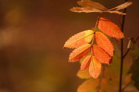 palate: autumn