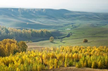 vealy: Autumn