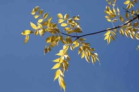 autumn Stock Photo - 14075614