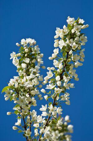 androecium: flowers