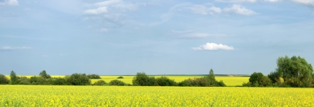 Rapeseed field. Yellow flowers. The bright sun. blue sky