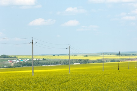Power poles, standing in a field photo