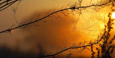 woven web of the spider, dew on a spider web Stock Photo - 15320868