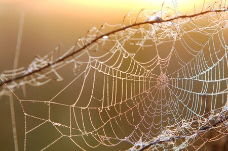 woven web of the spider, dew on a spider web Stock Photo - 15320891