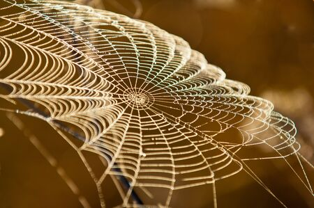 woven web of the spider, dew on a spider web Stock Photo - 15320909