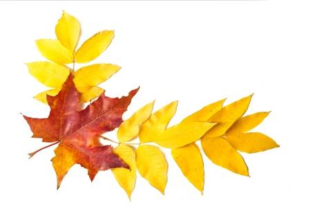 las hojas de otoño Foto de archivo