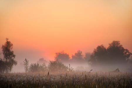 Autumn Mist, trees are wet, damp fog of photo