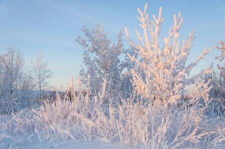 Winter snow birch