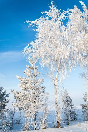 Trees covered with rime, a bright sunny day Stock Photo