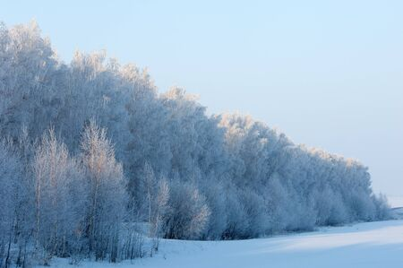 Trees covered with rime, a bright sunny day photo