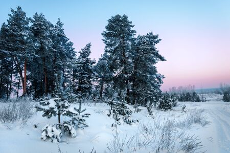 Trees covered with rime, a bright sunny day Stock Photo - 17378836