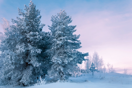 Trees covered with rime, a bright sunny day Stockfoto
