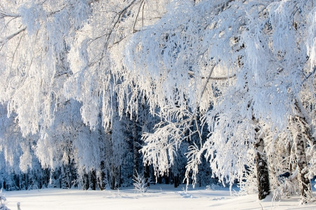 Trees covered with rime, a bright sunny day 写真素材