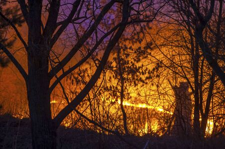Forest Fire Burning at Night photo