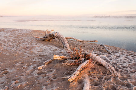 Snag on the shore. Beautiful nature composition. Dry tree on the foreground. photo